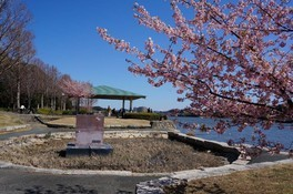 佐鳴湖公園の桜 画像(4/4)