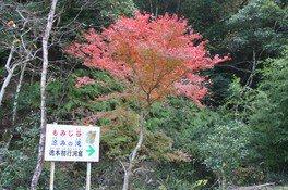 大滝川森林公園の紅葉 画像(3/3)