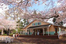 成田ゆめ牧場の桜 画像(4/5)