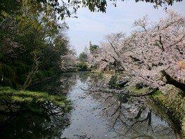 道後公園の桜 画像(2/5)