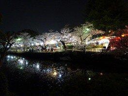 道後公園の桜 画像(3/5)