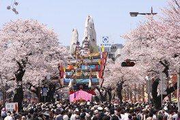 平和通りの桜 画像(3/3)