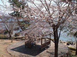 城下公園の桜 画像(2/2)