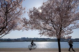 狭山池公園の桜 画像(3/5)