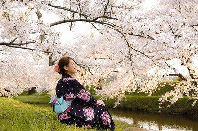玉湯川堤の桜