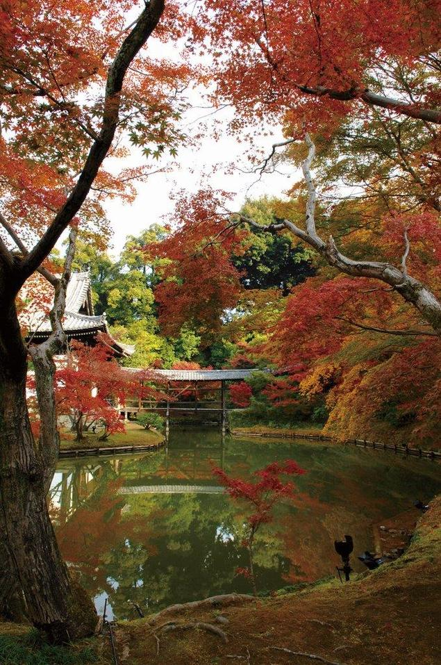東山(高台寺)の紅葉