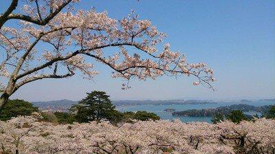 西行戻しの松公園の桜