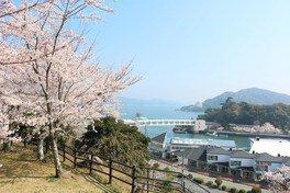 鳥羽城跡 城山公園の桜 画像(2/2)