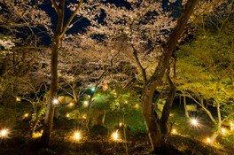 積善山三千本桜 画像(3/3)