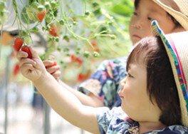 所沢北田農園 苺のマルシェ いちご狩り 画像(3/3)