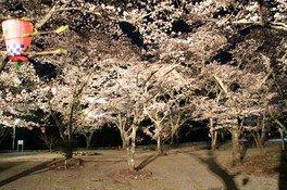 大滝峡自然公園の桜 画像(2/2)