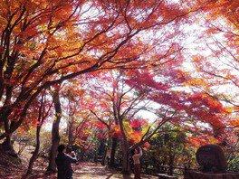 尾関山公園の紅葉 画像(2/2)