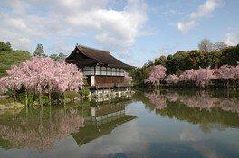 平安神宮 神苑の桜 画像(2/5)