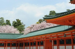 平安神宮 神苑の桜 画像(4/5)