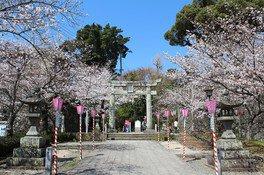 大村公園(大村神社)の桜 画像(4/5)