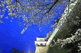 大村公園(大村神社)の桜 画像(5/5)