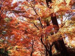 静岡県立森林公園の紅葉 画像(2/5)