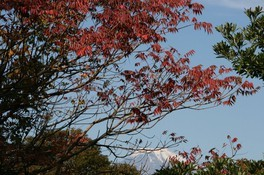 香貫山の紅葉 画像(2/2)