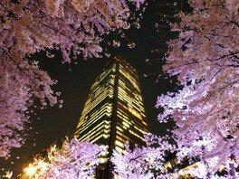 東京ミッドタウンの桜 画像(4/5)