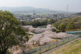 岡岳公園の桜 画像(2/2)