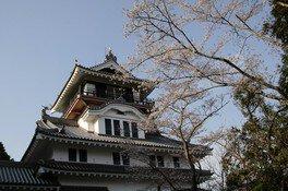 為松公園の桜 画像(3/5)