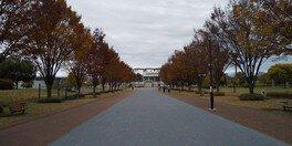 熊谷スポーツ文化公園の紅葉 画像(2/2)