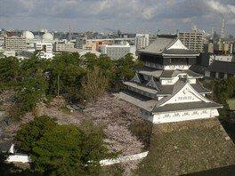 勝山公園(小倉城)の桜 画像(2/5)