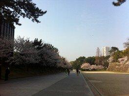 勝山公園(小倉城)の桜 画像(4/5)