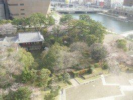 勝山公園(小倉城)の桜 画像(5/5)