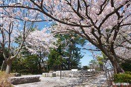 西公園の桜(福岡県) 画像(3/3)