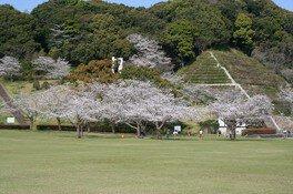久峰総合公園の桜 画像(3/5)