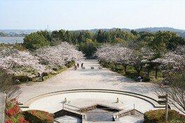 久峰総合公園の桜 画像(5/5)