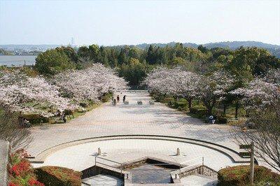 久峰総合公園の桜
