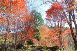千葉山ハイキングコースの紅葉 画像(2/4)