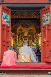 池上本門寺の桜 画像(3/3)