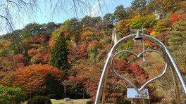 きみまち阪県立自然公園の紅葉 画像(2/2)