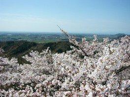 太平山県立自然公園の桜 画像(4/4)