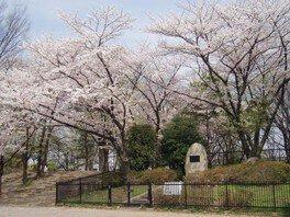 舎人公園の桜 画像(2/5)