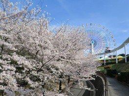 ハーモニーランドの桜 画像(2/5)