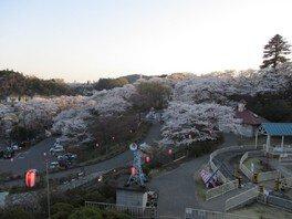 千手山公園の桜 画像(2/3)