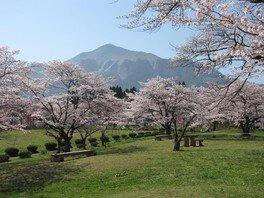 羊山公園の桜 画像(4/4)