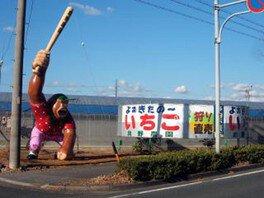 島野農園 いちご狩り 画像(3/3)