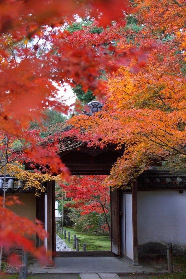 赤や黄の色鮮やかな紅葉が楽しめる