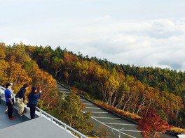 富士山富士宮口五合目(静岡側)及び富士山スカイラインの紅葉の画像(2/3)