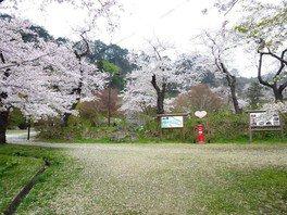 きみまち阪県立自然公園の桜 画像(3/3)