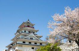 唐津城(舞鶴公園)の桜 画像(2/3)