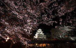 唐津城(舞鶴公園)の桜 画像(3/3)