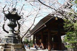 靖国神社の桜 画像(3/4)