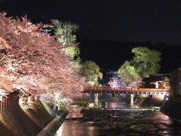 中橋周辺の桜 画像(2/2)