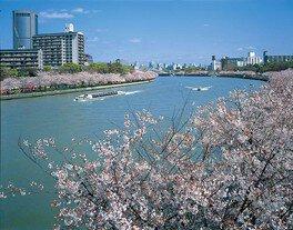 毛馬桜之宮公園の桜 画像(4/5)